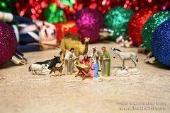 The true spirit of Christmas lives in our hearts. (Lon Casler Bixby) Tags: loncaslerbixby neoichi christmas merrychristmas nativity jesus babyjesus fineartphotography fineart fineartprints littlefigures littlepeople tabletop tinyfigures tinypeople hoscale hofigures hopeople plastictoys preiser plasticfigures toys toymodels toyfigures toyphotography plasticpeople artistic artisticphotography extremecloseup ecu interiordesign stilllife kids kidstoys bokeh bigworlds macro macrolens macrophotography mini miniaturephotography miniatures miniature micro modeltoys miniworlds california canonphotography canon