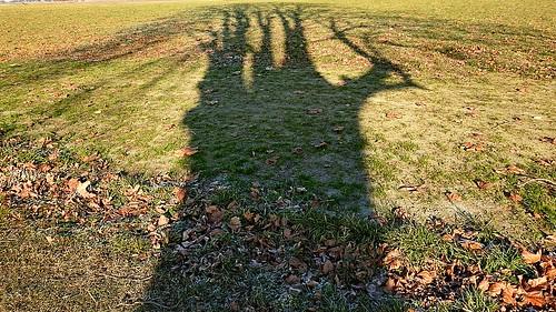 Baumschatten - Schattenbaum