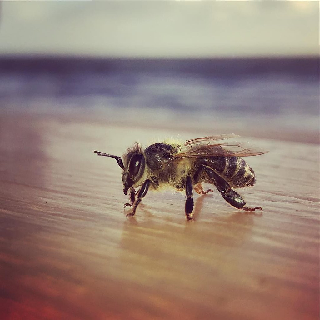 Bee on Boardwalk Cafe