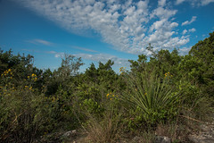 Hill Country View - Government Canyon State Natural Area - Bexar County - Texas - 11 September 2016 (goatlockerguns) Tags: live oak government canyon state natural area bexar county texas nature park statepark trees tree forest hillcountry usa unitedstatesofamerica south southern southwest west