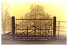 ...at the gates of Dawn (Myrialejean) Tags: sun silhouette gate tree trees field fog mist circles angles outline outdoors bright post fence railing upright barred entry locked