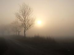 Solid Air (AMcUK) Tags: xf1 fujifilm fuji fujixf1 sunrise foggy fog sun hazy hazyshadeofwinter winter wintersun silhouette trees fields early earlymorning morning norfolk clippesby