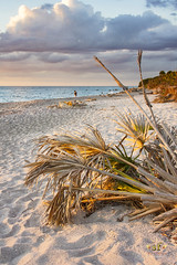 Tropical Paradise (SteveFrazierPhotography.com) Tags: caspersenbeach venice sarasotacounty florida fl sunset evening beautiful clouds seashells gulfcoast sand rocks rocky rockformations shore shorline stevefrazierphotography canoneos60d shellingbeach park gulfofmexico sharksteeth winter december 2016 wading landscape seascape waterscape