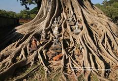 Sukhothai, Wat Si Sawai, good luck statues (blauepics) Tags: world park city tree heritage thailand temple site good buddha si faith religion roots statues buddhism unesco luck stadt historical wat statuen baum tempel sukothai sukhothai weltkulturerbe glcksbringer wurzeln historisch glck glaube buddhismus sawai