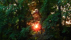 Deep Woods Sunset (Jim Mullhaupt) Tags: wood pink trees sunset red wallpaper sky orange sun black color tree green weather silhouette yellow clouds forest landscape gold evening maple oak nikon flickr sundown dusk pennsylvania p900 coolpix deepwood hardwood endofday warrencounty alleghenynationalforest warrenpa mullhaupt elktownship russellpa nikoncoolpixp900 coolpixp900 nikonp900 jimmullhaupt