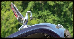 Swan hood ornament (Dave Redman pics) Tags: car automobile hoodornament carshow carhood cardecoration