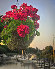 Flowers on the Hodgekiss Bridge (Singing With Light) Tags: moon sunrise photography spring downtown sony july ct milford 3rd 2015 mirrorless lismanlanding singingwithlight singingwithlightphotography forttrumbullbeach alpha6000 sunsetctkitlens skitlenssonya6000