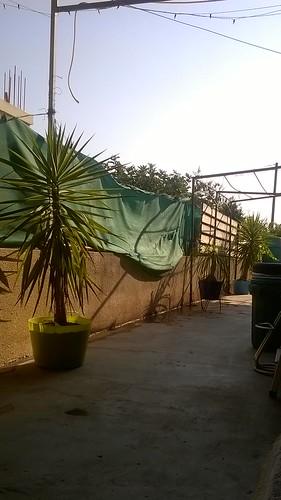 My Cyprus Backyard