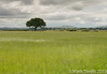 Field of Grass (Mark Twells) Tags: england unitedkingdom gb annscroft thattree