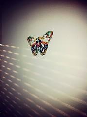 Butterfly (nic0v0dka) Tags: butterfly papillon farfalle