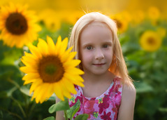Sunflowers (Annie Fischinger Fotografie) Tags: light sunset red portrait orange sunlight cute green nature girl smile yellow kids backlight canon hair children 50mm ginger kid glow child dress natural skin f14 fineart chiffon sunflowers 5d freckles tone available fiel sunflare