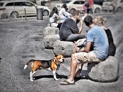 a dog's life (zuiko12) Tags: munich zoom streetphotography olympus zuiko omd em1 1240mm mzuiko