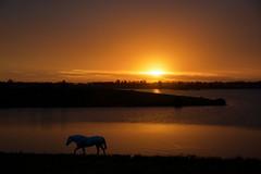 Último instante (Eduardo Amorim) Tags: cavalos caballos horses chevaux cavalli pferde caballo horse cheval cavallo pferd crioulo criollo crioulos criollos cavalocrioulo cavaloscrioulos caballocriollo caballoscriollos pampa campanha pelotas costadoce riograndedosul brésil brasil sudamérica südamerika suramérica américadosul southamerica amériquedusud americameridionale américadelsur americadelsud cavalo 馬 حصان 马 лошадь ঘোড়া 말 סוס ม้า häst hest hevonen άλογο brazil eduardoamorim pôrdosol poente entardecer poniente atardecer sunset tramonto sonnenuntergang coucherdesoleil crepúsculo anoitecer açude barrage dam damm aguada diga