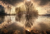 the other side (Chrisnaton) Tags: surreal pond mirroring nature landscape outdoor sun theotherside ducks tree