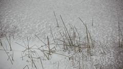 Winter_20 (losing.today) Tags: nature oregon outdoors pacificnorthwest portland pdx portlandor portlandoregon cold coldseason winter ice frozen