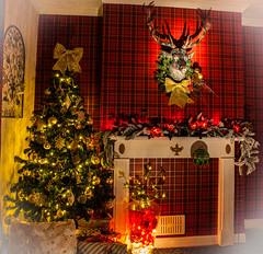 our christmas tree (colin 1957) Tags: christmas tree