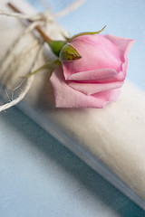 rose (borealnz) Tags: rose pink paper string flower roll document diagonal