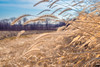 sideways (severalsnakes) Tags: 365 ks2 m3528 missouri pentax saraspaedy countryroad dirtroad farm fence foxtail grass gravelroad manual manualfocus rural