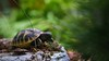 DSC02815 (Henryk D) Tags: natur schildkröte tierwelt