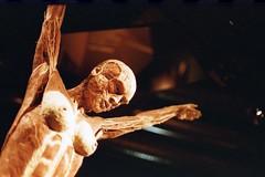 BerlinoGen17005 (Matteo Scaltriti (Cloudscollector)) Tags: berlin berlino film analogic analogica analogico plastination human body muscles corpo umano plastinazione