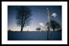 Frozen (MartinFechtner-Photography) Tags: winter stars sterne nightscape night nacht nachtaufnahme milkyway milchstrase frozen landscape tree trees baum bäume
