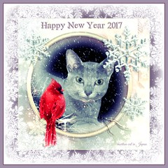 Marin & her Mama wish everyone a Happy New Year! (martian cat) Tags: russianblue newyears kitty kittycat cat pet ©martiancatinjapan allrightsreserved© happynewyear glücklichesneuesjahr omedettogozaimasu ハッピーニューイヤー 明けましておめでとうございます bonneannée felizañonuevo buonanno macro marin ©allrightsreserved martiancatinjapan© martiancatinjapan cards merrychristmas motivational joyeuxnoël fröhlichiwiehnacht kurisumasuomedeto feliznavidad メリークリスマス buonnatale motivationalposter inspirational ☺allrightsreserved allrightsreserved caption captioncollection christmas christmasmemories ☺martiancatinjapan martiancat creativity onwhite girlkitten kitten