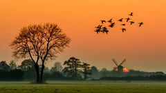 The day slowly got to its end (jwfoto1973) Tags: mühle niederrhein sunset sonnenuntergang silhouetten silhouette johannesweyers d7100 germany deutschland landschaft landscape wildgänse mill tree baum wiese wild geese