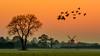 The day slowly got to its end (jwfoto1973) Tags: mühle niederrhein sunset sonnenuntergang silhouetten silhouette johannesweyers d7100 germany deutschland landschaft landscape wildgänse mill tree baum wiese wild geese