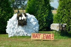 """HAY EWE!"" (Jake (Studio 9265)) Tags: hay bale art creative display artwork country rural usa united states america todd county ky kentucky fall 2016 ewe sign fluffy white sheep"