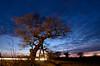Ketts Oak at dusk (Jacob Kenworthy) Tags: light longexposure le wymondham kettsoak landscape lights sunset