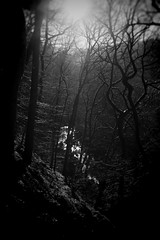 Hardcastle Crags (Paul Frankl) Tags: hardcastlecrags plath wood valley calderdale moon mood