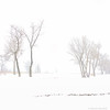 winter (What Marty Sees) Tags: snow trees mist fog square dreamy silhouette light natur morning beautyinnature cze 2017 czechia highkey