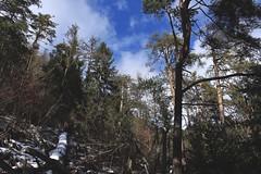 Vollèges (bulbocode909) Tags: valais suisse vollèges valdentremont forêts nature montagnes arbres nuages ciel vert bleu hiver neige troncs