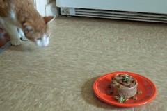 P1110614 (150hp) Tags: hansel cat birthday treat cake canned moist food flowers crunchies fiestaware panasonic lx3