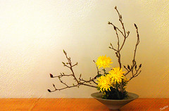Ikebana (` Toshio ') Tags: flower yellow topv111 tag3 taggedout ilovenature japanese washingtondc dc washington districtofcolumbia topv333 tag2 tag1 topc arboretum zen lovely 1on1 toshio