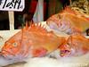 Dead Fish I