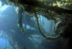 Zenobia's Deck (utnapistim) Tags: travel blue sea nature water coral tag3 taggedout interesting mediterranean tag2 tag1 dive cyprus scuba wreck a80 zenobia larnaca