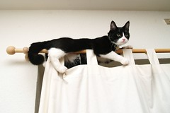 Yes, this IS comfortable (Dr. Hemmert) Tags: cats pets cute animals indoors