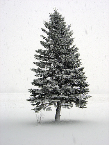 Lone tree in a blizzard