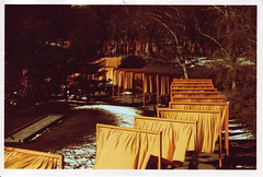 gates5 (thearnoswimmer) Tags: 2005 nyc trees newyork film crossprocessed centralpark saffron christo thegates gatesmemory