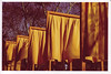 gates4 (thearnoswimmer) Tags: 2005 nyc trees newyork film crossprocessed centralpark saffron christo thegates gatesmemory