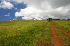Walking the way ? (iko) Tags: chile blue sky 15fav cloud green nature topv111 1025fav 510fav way chili hill ciel nuage easterisland chemin rapanui isladepascua iledepaques interestingness154 i500