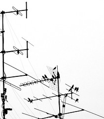 Birds on the wire (... Arjun) Tags: blackandwhite bw 15fav plants white black nature birds animals silhouette by 1025fav 510fav wire nikon singapore asia d70s highcontrast cable 2006 rope line chain 1870mmf3545g 2550fav 500v50f 50100fav 1000v100f lead naturalworld antenna floraandfauna happening bukittimah arranged goingon takingplace scheduled continuously nextto neverendingly 67points mireasrealm 1000v40f proceeding ontopof 100200fav restingon lyingon bythesideof withoutstopping withoutabreak