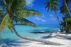 Bora Bora - Pearl Beach (H!ghTower) Tags: beach polynesia honeymoon palm tahiti motu borabora frenchpolynesia sdsee