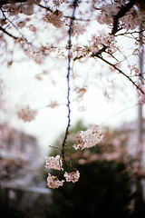 #03 blooming (moaan) Tags: life 50mm dof bokeh 2006 f10 noctilux zeissikon fujiprovia100f rdpiii inlife gettyimagesjapanq1 gettyimagesjapanq2