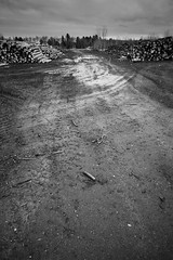 Ravaged Forest 03 (Sol Lang) Tags: trees sky bw canada sol nature clouds forest death holocaust blackwhite sad montréal montreal destruction bark stump lang sollang netneutrality utatafeature heutekunst sollangphotographs