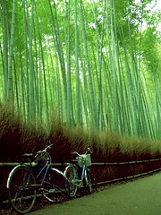 (YY) Tags: japan kyoto bikes bamboo kansai