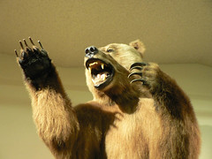 Grizzly Bear at the Las Vegas Natural History Museum