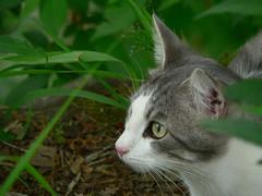 Gerbil 4/19/06 (robert_rvnwd) Tags: cat gerbil