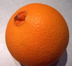 Navel Orange (Starrlett) Tags: orange fruit blog navel outie navelorange